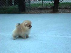 Aww chika trying to walk lol