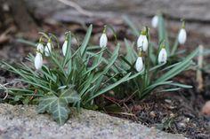 Spring in Denmark by blogliebling.dk