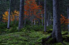 Autumn Woods by luca-lanzani. Please Like http://fb.me/go4photos and Follow @go4fotos Thank You. :-)