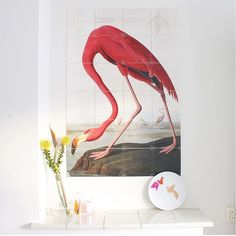 Lovely Flamingo!  Get inspired at www.ixxidesign.com/inspiration  #IXXI #ixxiyourworld #Flamingo #love #spring #home #interior #inspiration #nature #ixxidesign #art #photooftheday #walldecoration