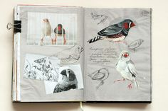 journalling birds