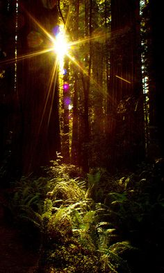 The Redwood forest in CA.
