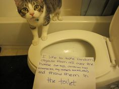 An epic gallery of cat shaming pictures that prove these cats are the naughtiest in the world. A hilarious cat shaming picture gallery. Cat Shaming, Public Shaming, Crazy Cat Lady, Crazy Cats, I Love Cats, Cool Cats, Funny Animals, Cute Animals, Crazy Animals