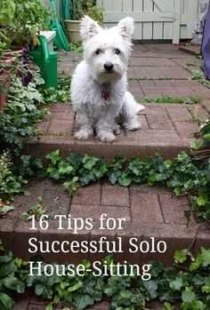 Tips for safe and successful solo house-sitting. http://solotravelerblog.com/16-tips-for-successful-solo-house-sitting/