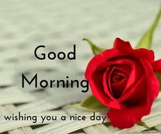 1475 Best Good Morninghave A Wonderful Day Images In 2019 Good