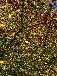#осень #природа