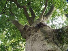 boom, beuk, najaar, bos, dehortensiatuin.blogspot