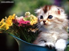 cats and flowers | Cat And Flower Wallpaper | Wallpaperholic