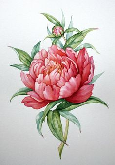 Розово-коралловый пион.  Акварель, А4.