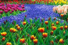 Beautiful Flower Garden | Wallpaper Forest Beautiful Flower Garden Wallpapers Pic #13