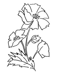 Awesome Picture Of Poppy Coloring Page : Color Luna Coloring Sheets, Coloring Pages, Poppy Coloring Page, Study Help, Online Coloring, Colorful Pictures, Poppies, Folk, Bible