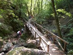 Müller Nándor, Barangolások a Pilisben és a Visegrádi-hegységben című könyve a Manóprogram csapatát is a szabadba csábította. Választásunk a séták között t