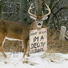 Poor Deer during hunting season! Deer Hunting Memes, Funny Hunting Pics, Hunting Guns, Hunting Stuff, Hunting Pictures, Fishing And Hunting, Texas Hunting, Hunting Crafts, Moose Hunting