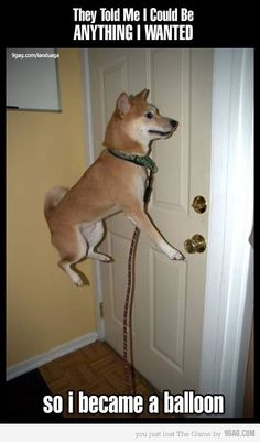 I want to fly!!!!! I have a dog like this....and he does this!!!!