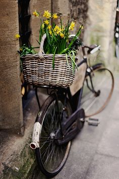 Use old bicycle with panniers and front basket as garden planter