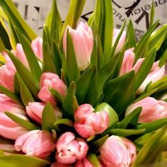 'In the pink' tulip hand tied bouquet