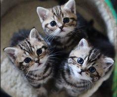 3 gatitos