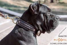 Double Leather Cane Corso Collar with Brass D-Ring for Leash attachment