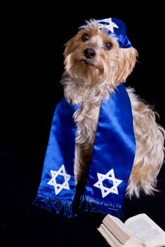 Tonight at sundown, Passover begins for Jewish people all over the world, but yesterday an entirely different group broke matzo for a seder—their dogs. Jewish Celebrations, Dog Bakery, Dog Barking, Red Sea, Labradoodle, Bat Mitzvah, Yorkie, Pet Care, Best Dogs