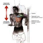 Правильная техника выполнения, этого упражнения, позволит эффективно развить большие мышцы грудной клетки и увеличить эластичность мышц плеча.