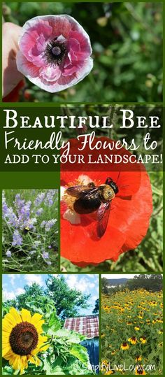 If you're looking for easy ways to help save the bees, check out this long list of bee friendly plantsand learn about the Beesponsible®️️ and National Wildlife Federation's pollinator-friendly, pesticide-free gardening efforts called Don't Kill My Buzz.It's easy to take action and help save the bees. AD