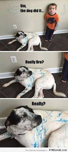 50 Hilarious (And Relatable) Dog Memes For National Dog Day - Funny Husky Meme - Funny Husky Quote - Oh I dont think so. The post 50 Hilarious (And Relatable) Dog Memes For National Dog Day appeared first on Gag Dad. Memes Humor, Funny Dog Memes, Funny Animal Memes, Funny Animal Pictures, Cute Funny Animals, Funny Cute, Hilarious Pictures, Super Funny, Mom Funny