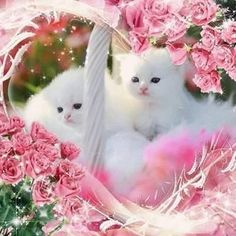 Pretty in Pink Kittens cute animals pink flowers cat roses white kitten kitty