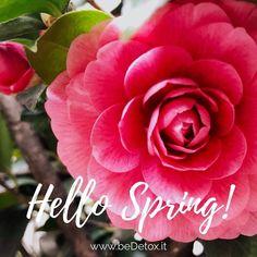 Hello Spring   #beDetox!