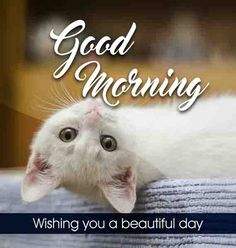 Cute happy white cat good morning image Beautiful Good Morning Wishes, Cute Good Morning Images, Latest Good Morning Images, Good Morning Images Flowers, Morning Pictures, Inspirational Good Morning Messages, Good Morning Love Messages, Good Morning Quotes, Morning Greetings Quotes