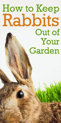 how to keep rabbits and other animals out of your garden humanely organically frugally and sustainably gardens pinterest rabbit gardens and