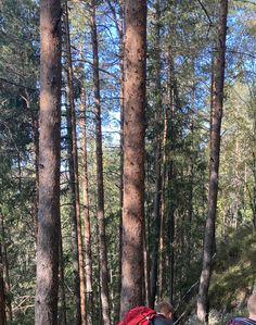 Trunks, Plants, Drift Wood, Tree Trunks, Plant, Planets