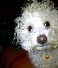 Buzz Bullet, Dogs, Animals, Animales, Animaux, Pet Dogs, Doggies, Animal, Animais