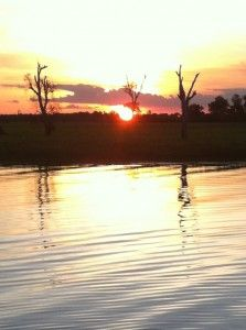 http://creativeblinds.com.au In the Kakadu, Crocodile Cloud at Sunset!!