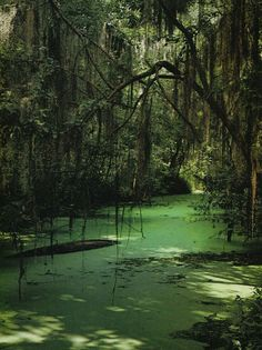 Okefenoke swamp , Folkston Georgia USA