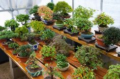 Kinashi Bonsai Sato - Dupuichs Photos. And such a beautiful bench too