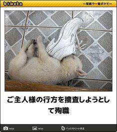ご主人様の行方を捜査しようとして殉職 Laughter, Dog Cat, Comedy, Funny Memes, Japan, Humor, Cute, Animals, Dogs