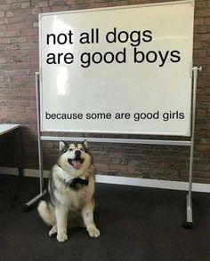 These doggo memes are definitely gonna make you squee so loud. These doggo memes are definitely gonna make you squee so loud. Animal Memes, Funny Animals, Cute Animals, Animal Facts, Dog Memes, Funny Memes, True Memes, Funniest Memes, Memes Humor
