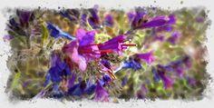 campanillas+flor+de+borraja+digitalart
