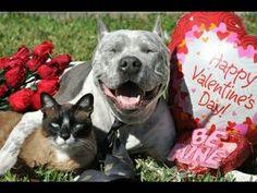 Happy Valentine's Day Card! XOXOX from PitBull Sharky and his Cat Max-Ar...