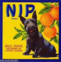 Scottish Terrier Puppy, Terrier Dogs, Tampa Florida, Tampa Bay, George Nelson, Vintage Labels, Vintage Posters, Art Posters, Vintage Ephemera