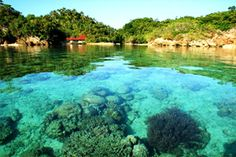 Danjugan Island, Cauayan, Negros Occidental - There are five lagoons: three landlocked and two flooded at high tide and colonised by coral and reef fish species.    Danjugan is fringed with turtle-nesting beaches and surrounded by diverse coral reefs.