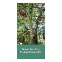 Famous Love Tree at St. Augustine, FL. photo card