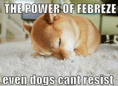 Funny dog sound asleep in this funny animal picture.