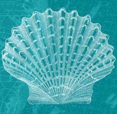 Cool aqua shell