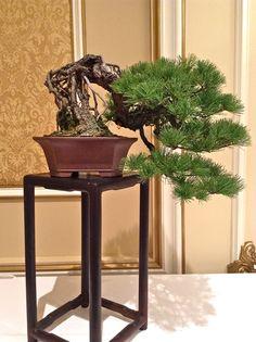 2013 bonsai convention