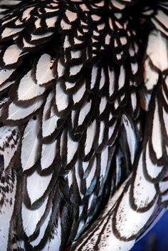 Black and white chicken feathers. Feather Art, Bird Feathers, Black Feathers, Patterns In Nature, Textures Patterns, Macro Photography, White Photography, Texture Art, Feather Texture