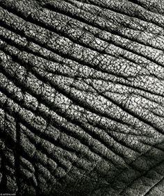Life Lines [Elephant Skin] artepalmer.com