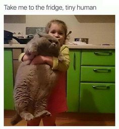 Take me to the fridge