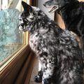 A férfi örökbe fogadta a fekete kiscicát… 7 évvel később a macska szőre változni kezdett…