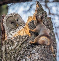 Ты чегой -то Сова ...орехи прячешь что ли?